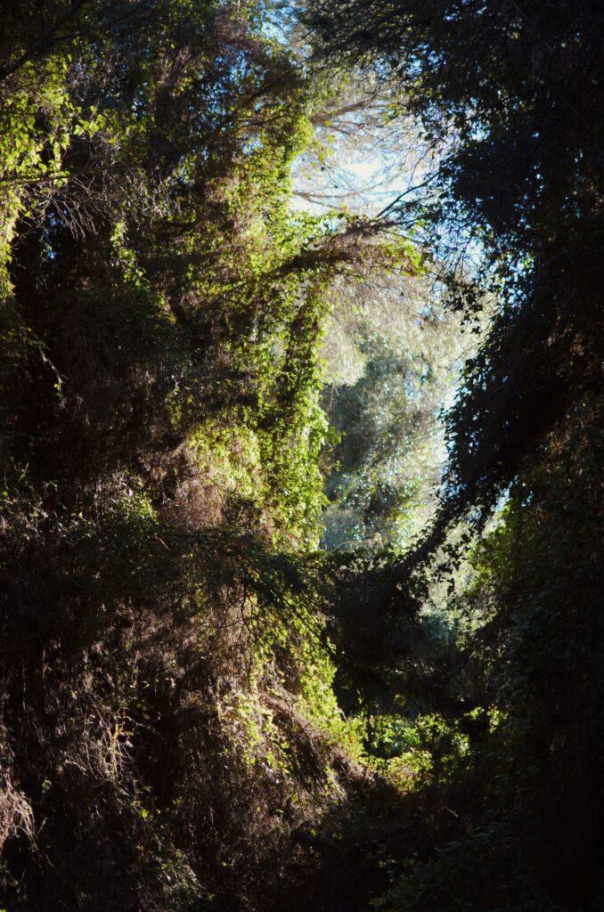 Ruta Botanica III